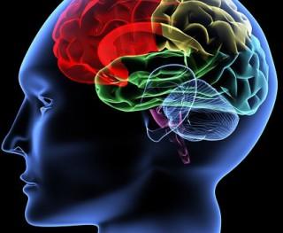 simulation-training-effects-on-the-human-brain